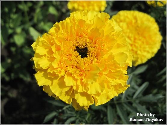 Цветы для сада многолетники для тени