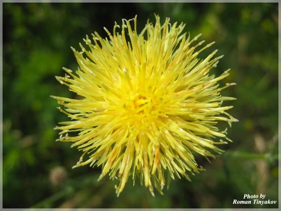 Живой цветок