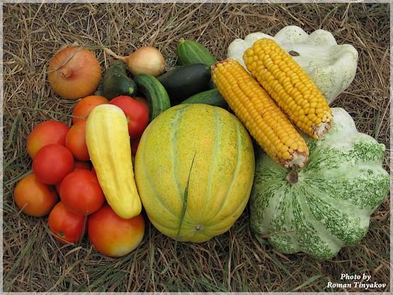 Овощи августа