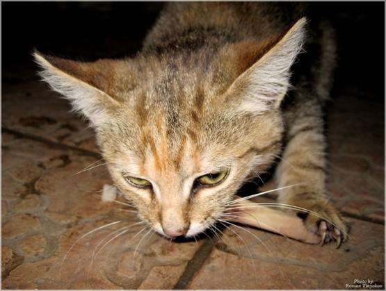 Кот и кость