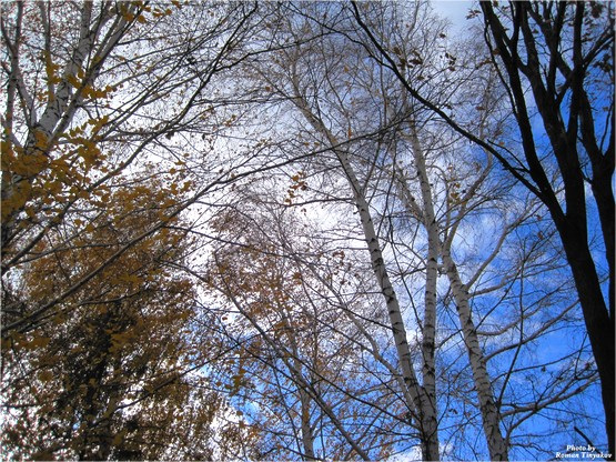 Осень сегодня