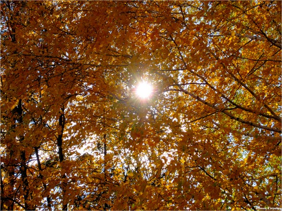 Медовая Осень