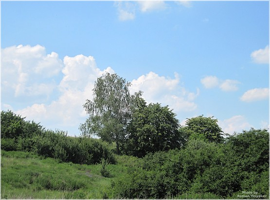 Зелёное лето