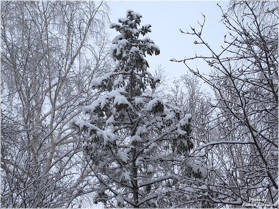 Ёлка в снегу