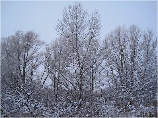 Серый пейзаж