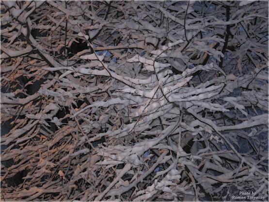 Ветви в снегу