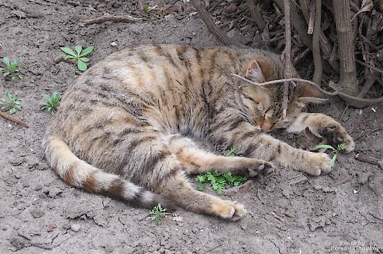 Кот задремал