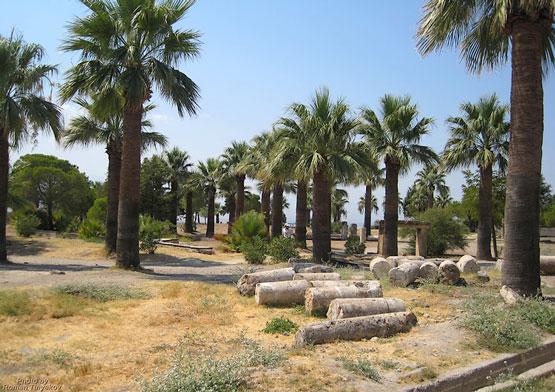 Колонны в пальмах