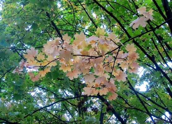 Осень повсюду