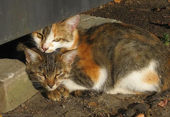 Кошки на солнышке
