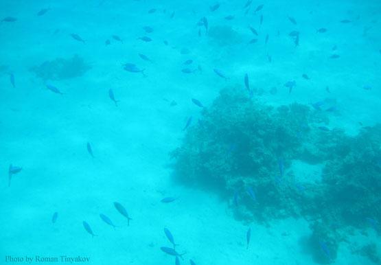 Рыбы у дна моря