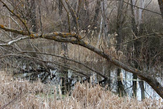 Весенний ставок