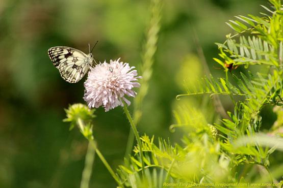 Бабочка на цветке с букашкой