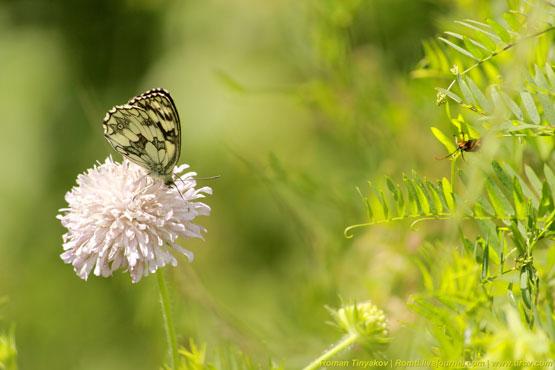Бабочка наслаждается нектаром