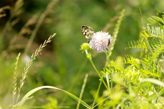 Бабочка с жуком на цветке
