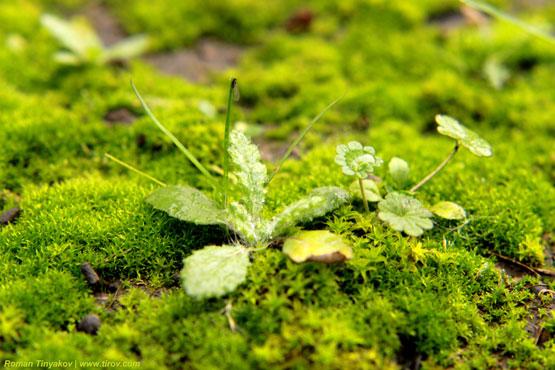 Трава с каплей воды во мхах