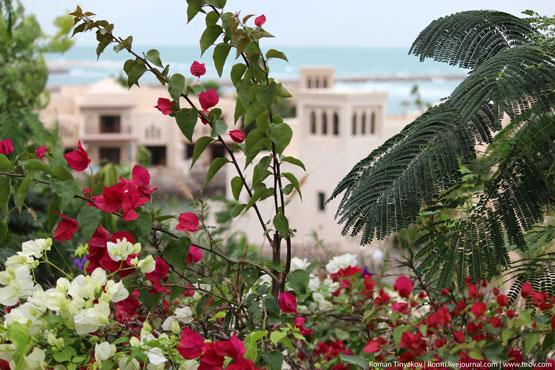 Бугенвиллия на фоне отеля в Персидском заливе