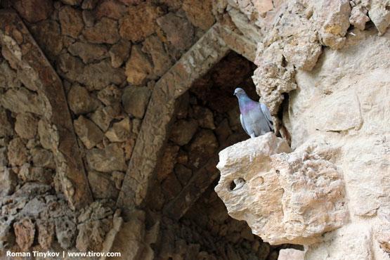 Голубь высматривает, где подкармливают