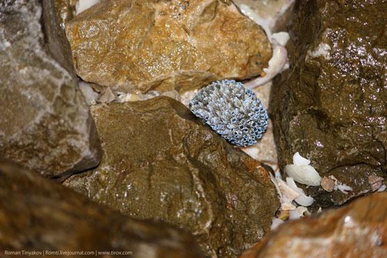 Живые камни Персидского залива
