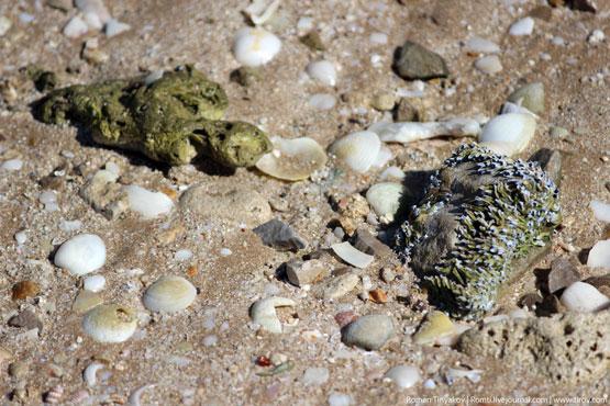 Камень мумия