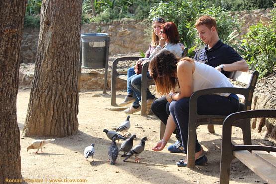 Кормят голубей в парке Гауди