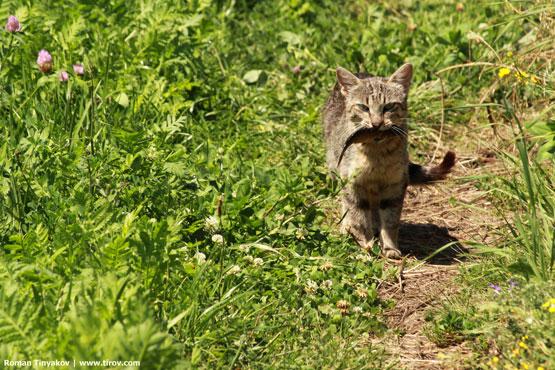 Кошка остановилась и задумалась