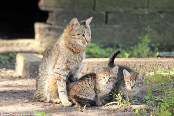 Котята с широко раскрытыми глазами