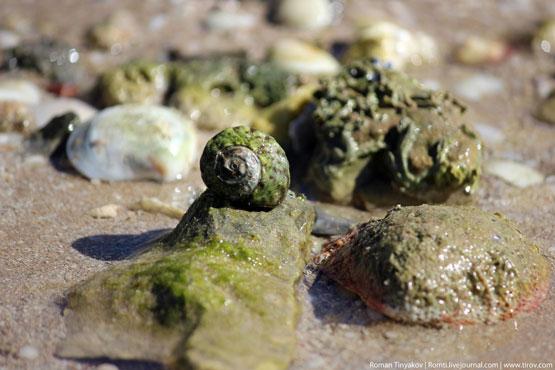 Моллюски на берегу во время отлива