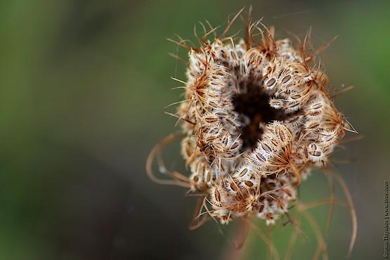 Семена на зелёном фоне