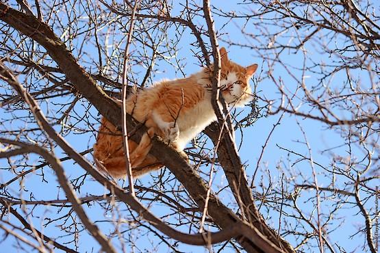 Рыжая кошка сидит высоко на дереве