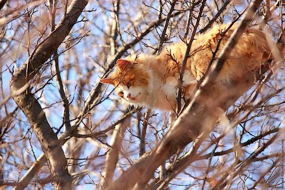 Кошка в ветках дерева