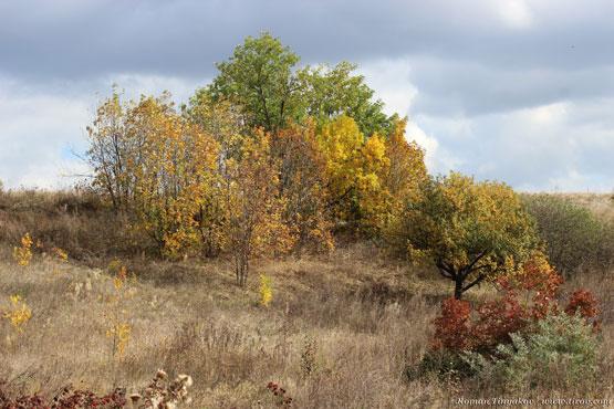 Осень в балке