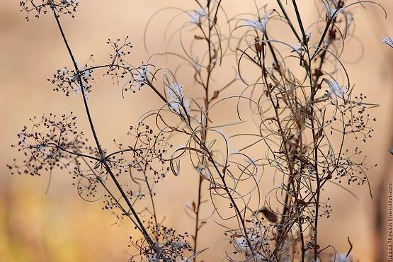 Фотогеничная трава