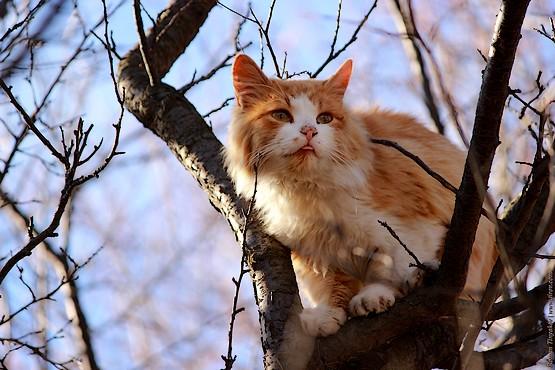 Рыжая кошка сидит на ветке и показывает язык
