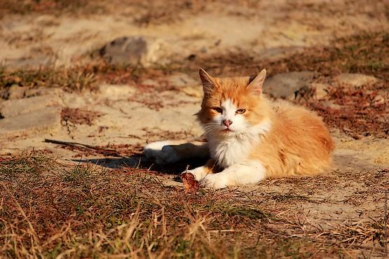 Кошка с сухими листьями
