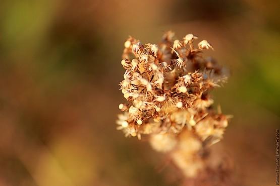 Семена разлетелись по окрестностям