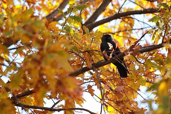 Удивлённая птица