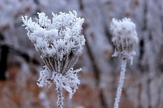 Белые цветы инея