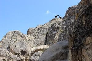 Козы на скалах долины Гёреме
