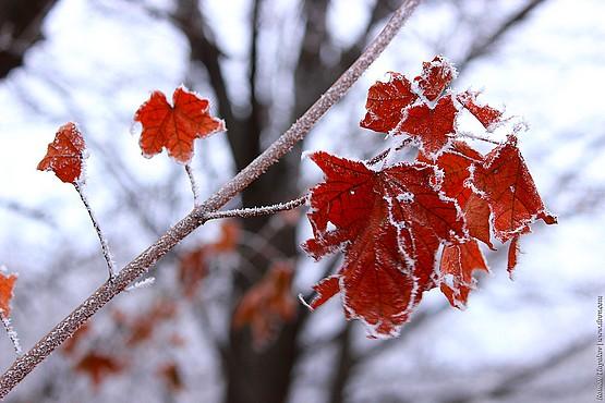 Листья с каемкой из инея