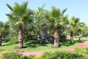 Беговая дорожка между пальм и цветущих кустарников