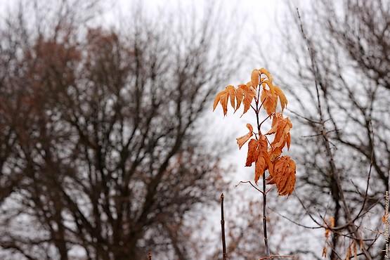 Желтые листья на фоне голых деревьев