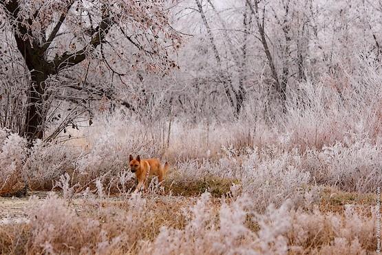 Собака с осенним окрасом