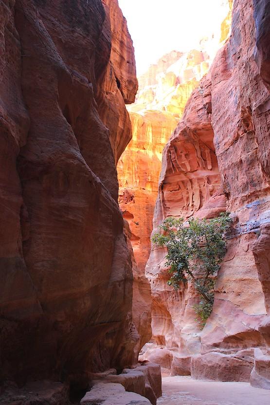 Дерево в скале ущелья
