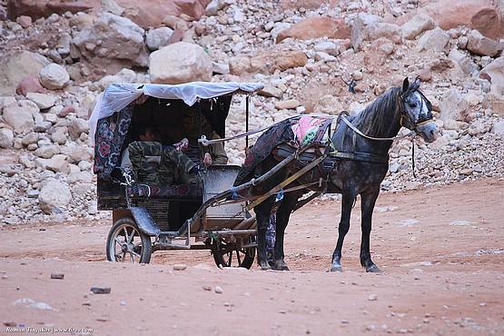 Экологически чистый транспорт в городе Петра