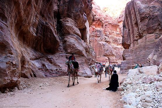 На верблюдах между красных скал