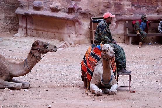 Верблюды отдыхают в Петра, Иордания