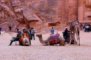 Верблюды в центре города Петра