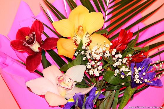 Орхидеи ко дню влюбленных