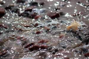 Камни и кораллы Красного моря в отступающей воде